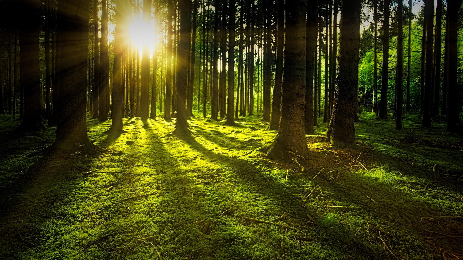 zon schijnt door bomen op het mos op de grond