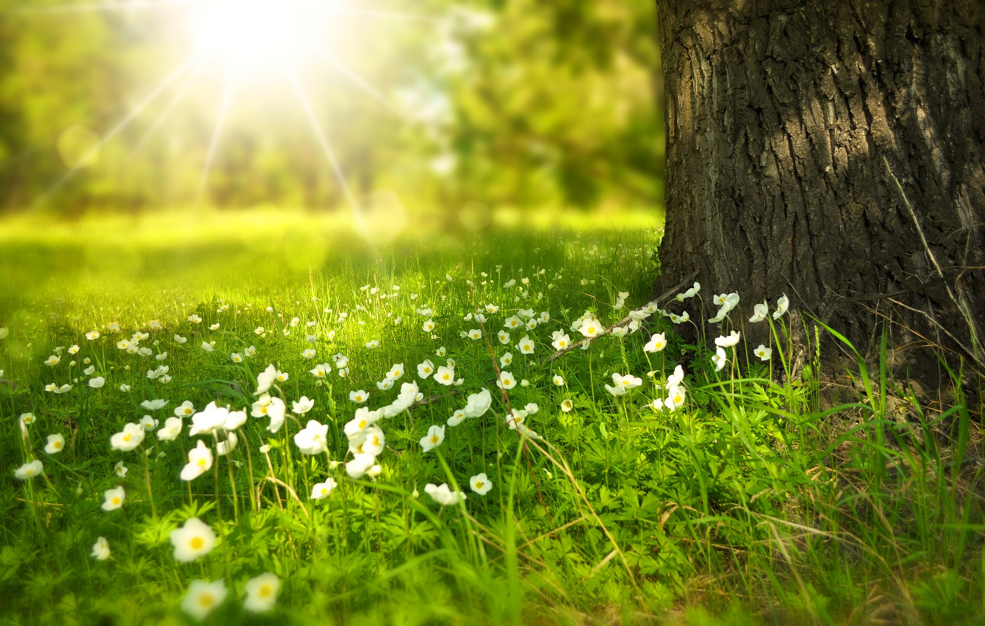 lentebloemen onder de boom in de zon